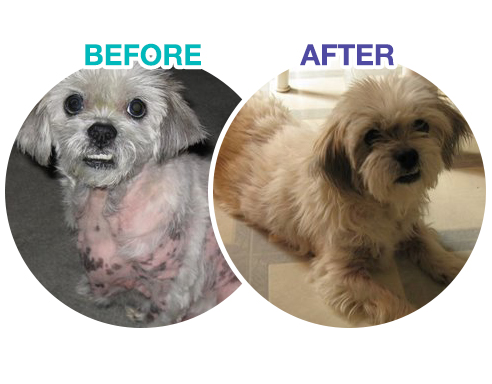 topical steroids for dogs