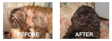 Skin Eze Natural Dog And Pet Skin Allergy Treatment