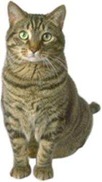 http://www.allergicpet.com/articles/cat_ringworm.jpg