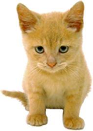 Debate: Dogs Vs. Cats