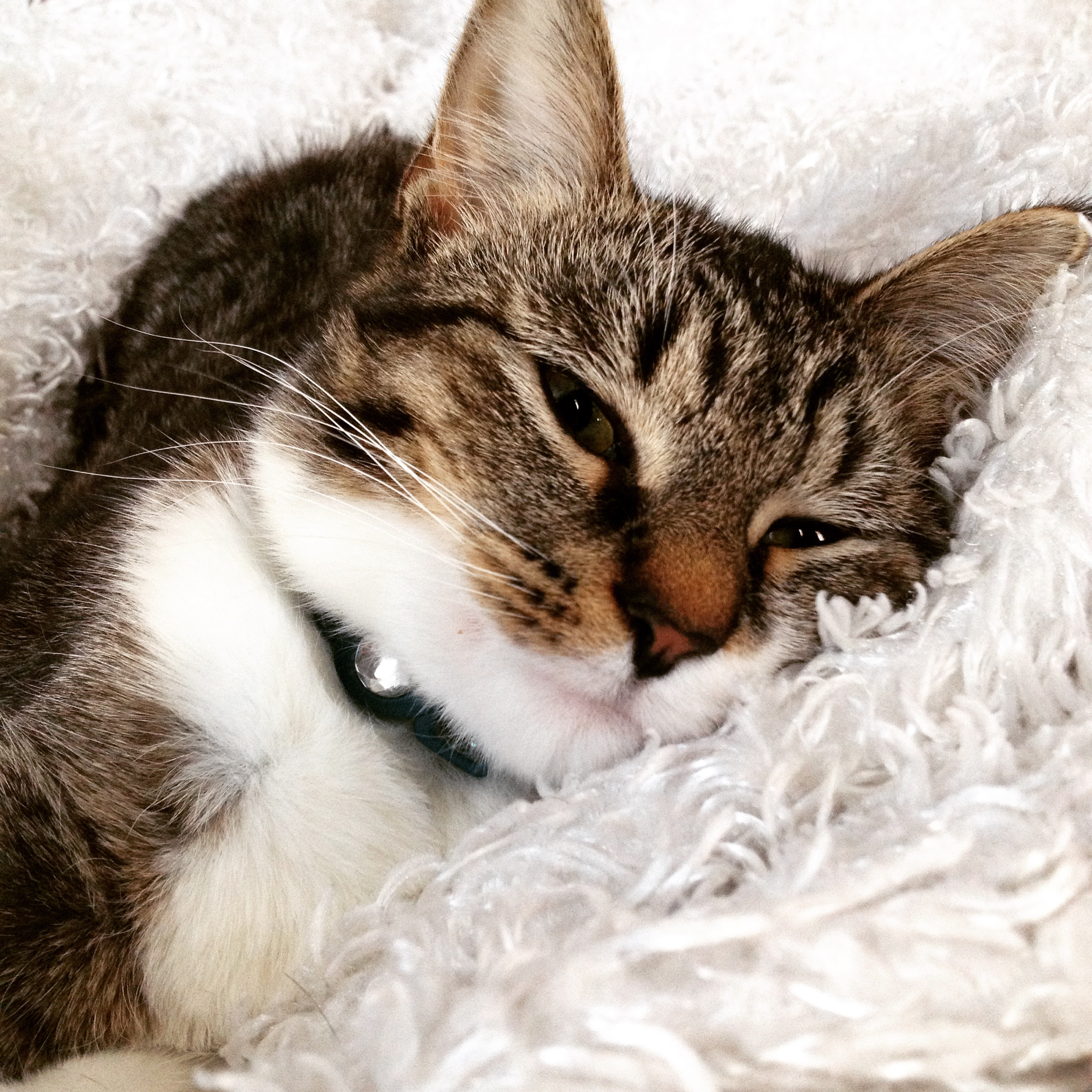 The cat has constipation. What to do immediately, and what is prevention 87